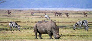 3 days Ngorongoro Wildlife safari