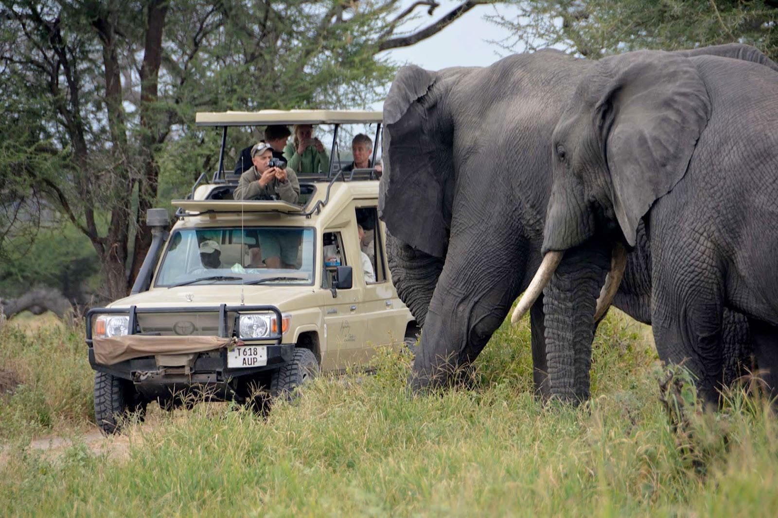 5 days Tanzania Wildlife safari
