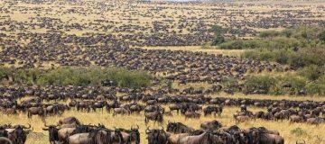 3 Days Tanzania Wildebeest Safari