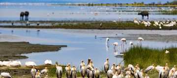 Facts about Lake Manyara National Park