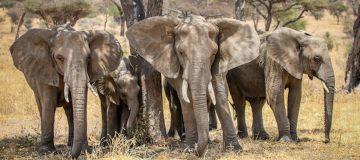 Facts about Tarangire National Park