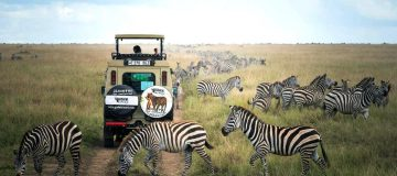 One Day Safaris in Tanzania