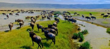 Top 6 Things to do in Ngorongoro Conservation Area