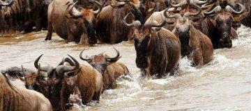 2 Days Serengeti National Park Safari