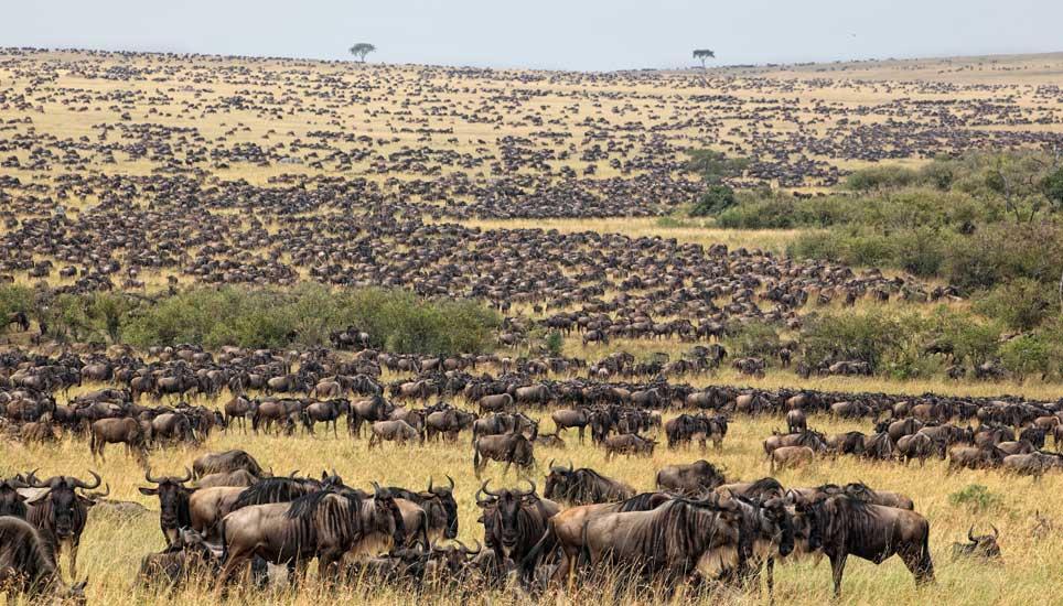10 days Serengeti and Bwindi gorilla safari
