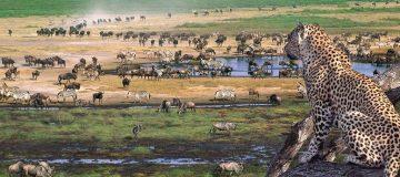 4 Days Ngorongoro Wildlife Tour