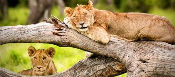4 Days Tanzania Wildlife Special