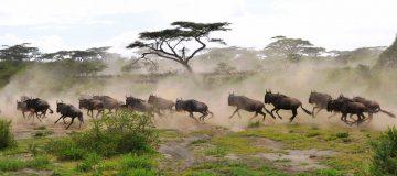 4 Days Tarangire National Park Safari