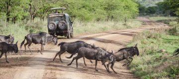 4 Days Tanzania Budget Safari