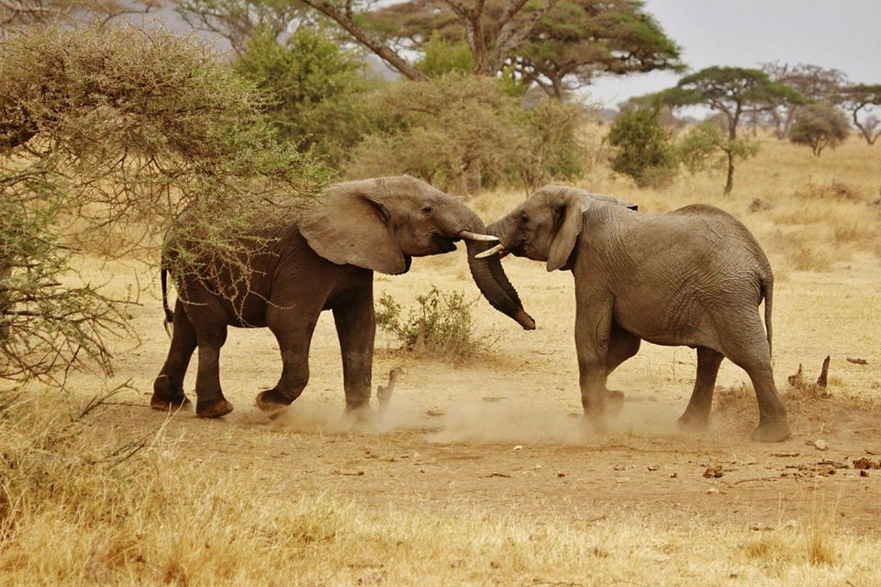 Wildlife safaris and beach holidays in Tanzania