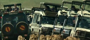 3 Days Tanzania Wildlife Safari