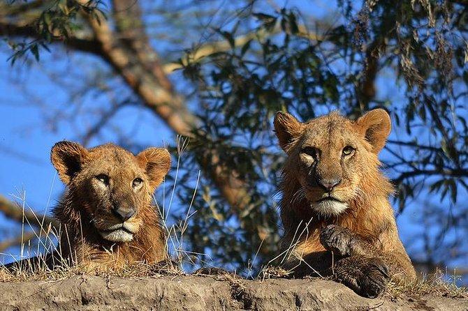 5 days Kenya big 5 safari