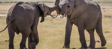 4 Days Nairobi & Amboseli Wildlife safari