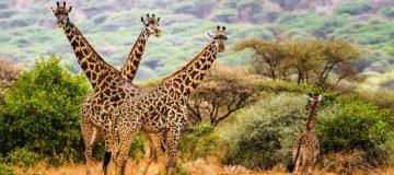 4 Days Tanzania Wildlife tour