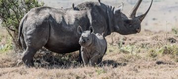 6 Days Tanzania Wildlife Safari