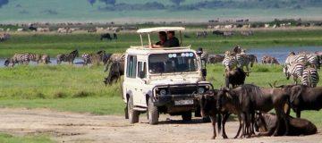 7 Days Tanzania Wildlife Safari
