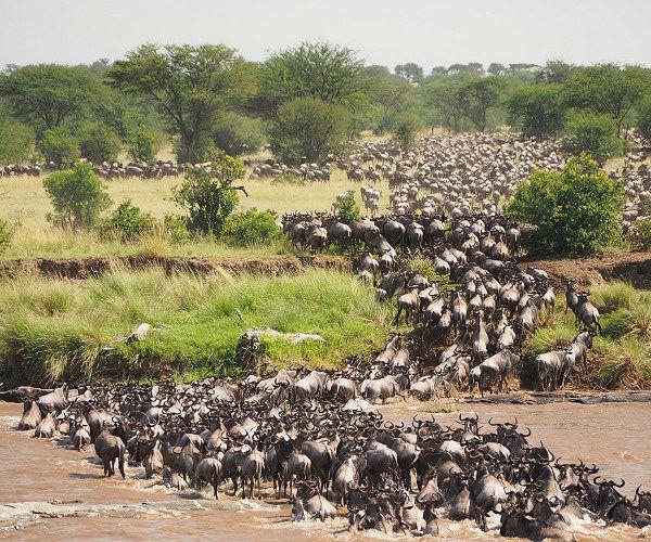 Wildlife Tourism in Tanzania
