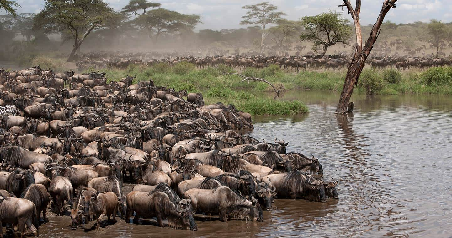 9 Days Tanzania wildlife safari