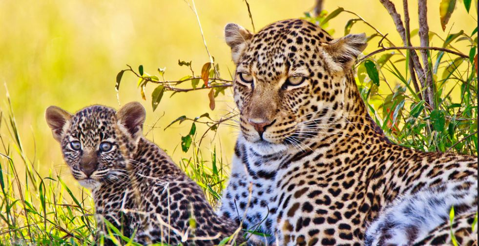 6 days Tanzania highlights safari