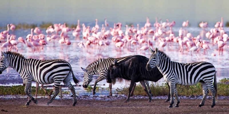 5 days Kenya special safari